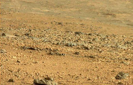 Strange Creature on Mars