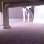 Hide and Seek with a Husky Video – Reverse Hide and Seek