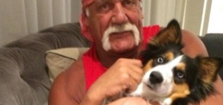 Hulk Hogan Celebrity Birthday Wishes and Brock Lesnar Videos