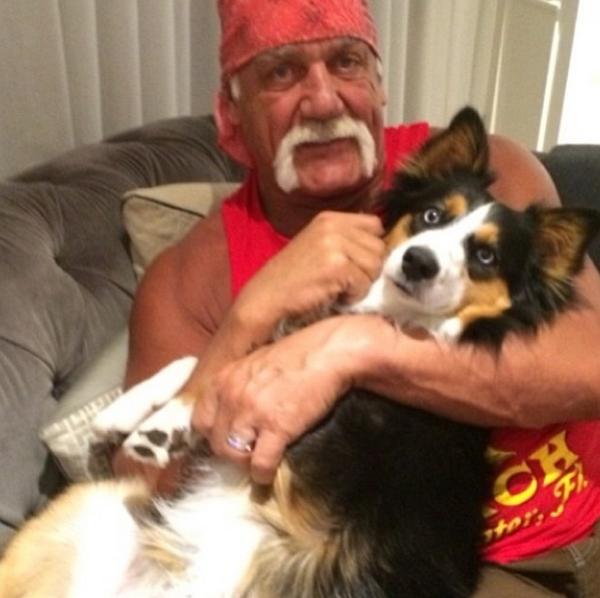 Hulk Hogan Celebrity Birthday Wishes