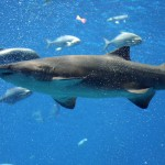 Shark Week 2014 – Starts Sunday August 10th