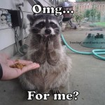 Funny Raccoon Picture OMG for Me? Meme