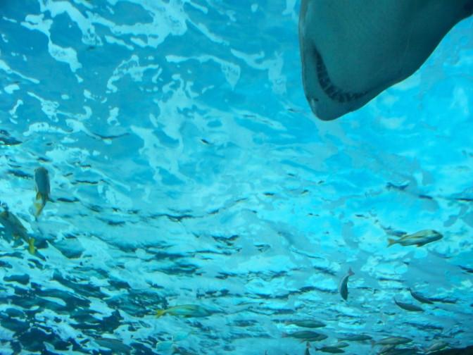 Submarine Shark