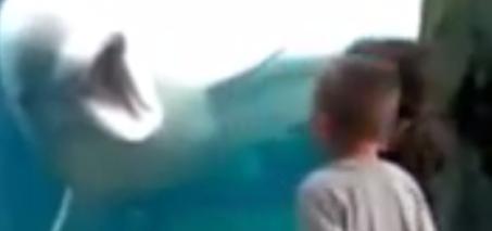 Beluga Whales Scare Kids – Whales Teasing Kids at Aquarium