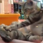 Cat Massage Video – Nice Cat Petting Another Cat's Face