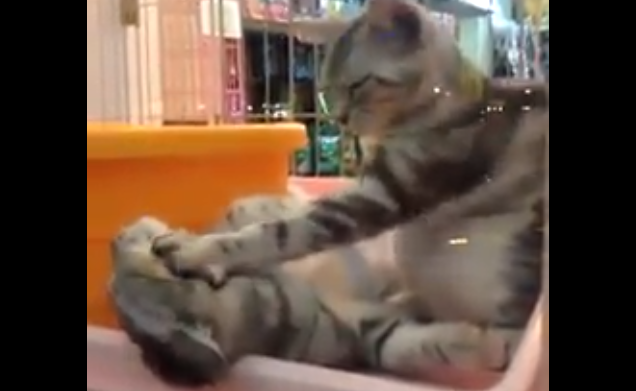 Cat Massage Video - Nice Cat Petting Another Cat's Face