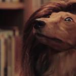 Dachshund's Creek – Dawson's Creek with Dogs VIDEO