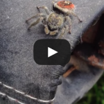 Just another day in British Columbia.. Spider Jumps at Kid