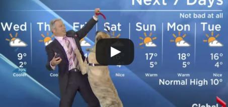 Weatherman vs Dog News Blooper VIDEO