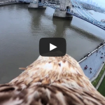 An Eagle's View of Tower Bridge (Bascule Bridge) in London