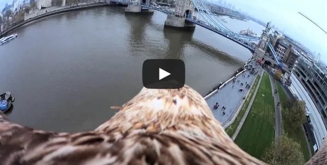 An Eagle's View of Tower Bridge (Bascule Bridge) in London