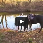 Apprehensive Horse Adorably Splashes In River