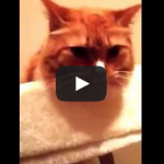 """Cat """"Licks"""" to the Sound of Packing Tape"""
