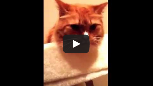Cat Licks to the Sound of Packing Tape