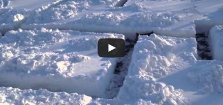 Dog in a Snow Maze