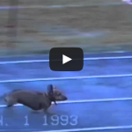 Dog wins a race using fear and intimidation