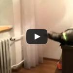 Ferret jump fail – It's definitely not a cat..