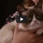 Grumpy Cat's Worst Christmas Ever – Lifetime