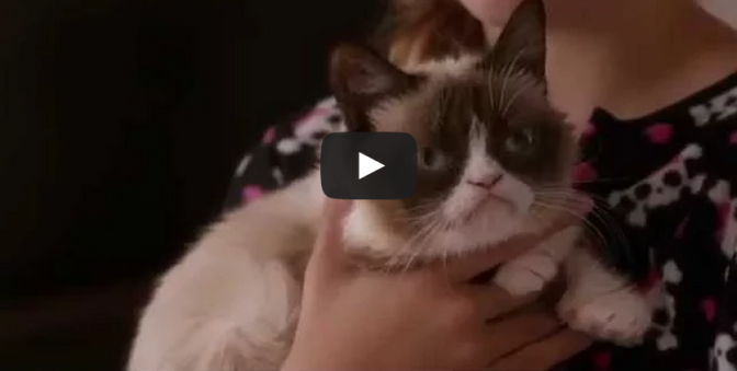 Grumpy Cat's Worst Christmas Ever - Lifetime