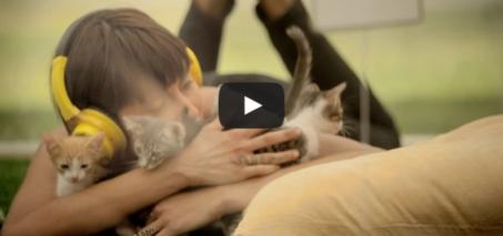 Kitten Therapy: The Prescription for Stress