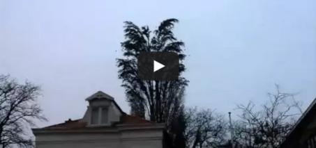 LiveLeak – Group of Birds Fly Simultaneously Away