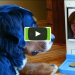 New Invention: iCPooch Internet Pet Treat Delivery & Video Chat