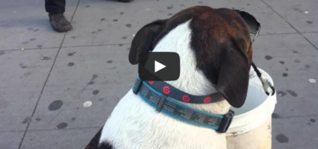 New York Post video of a dog begging for tips in NYC