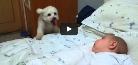 Puppy tries his best to see newborn baby