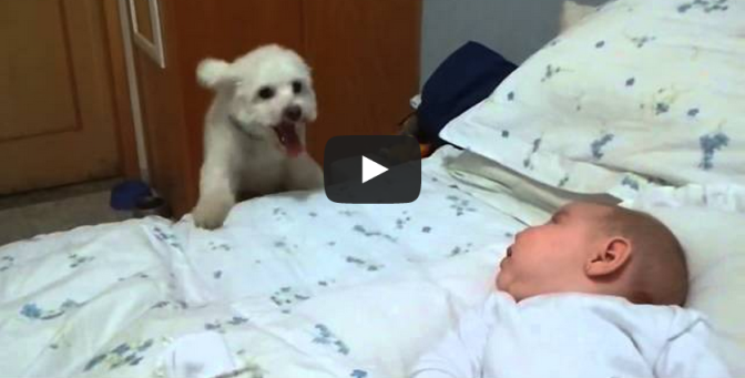 Puppy tries his best to see newborn baby