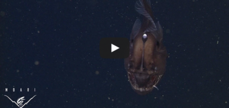The anglerfish: The original approach to deep-sea fishing