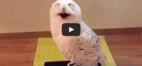 This laughing owl will make you forget about your problems