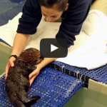 Welcome Pup 681! Orphaned Sea Otter Rescue