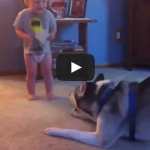 Baby and Husky, Deep in Conversation