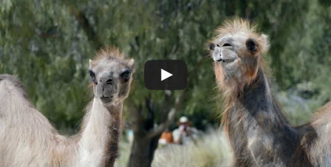 Camels: It's What You Do - GEICO