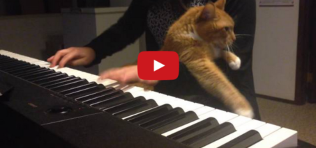 Cat Piano – Kitty gets Jealous of the Piano