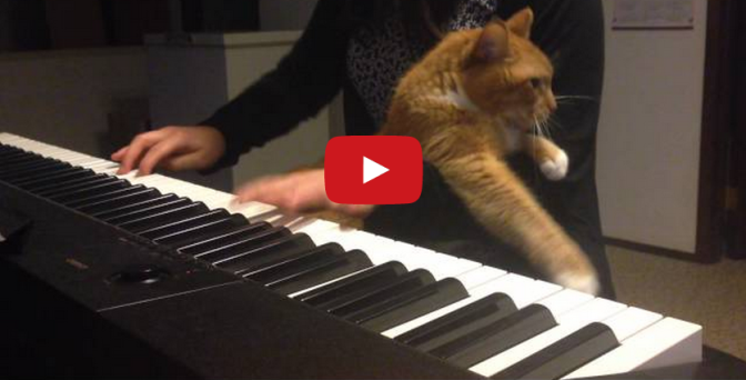 Cat Piano - Kitty gets Jealous of the Piano