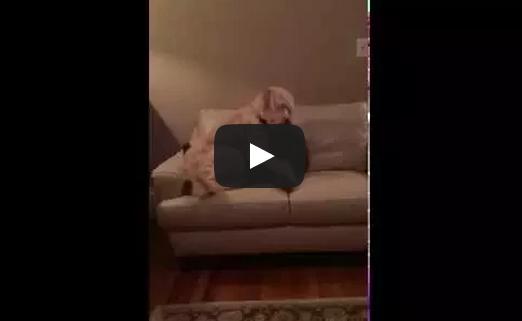 Dog Comforts Pal Having Bad Dream