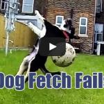 Dog Fetch Fails Compilation
