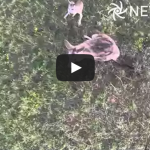 Drone vs Kangaroo