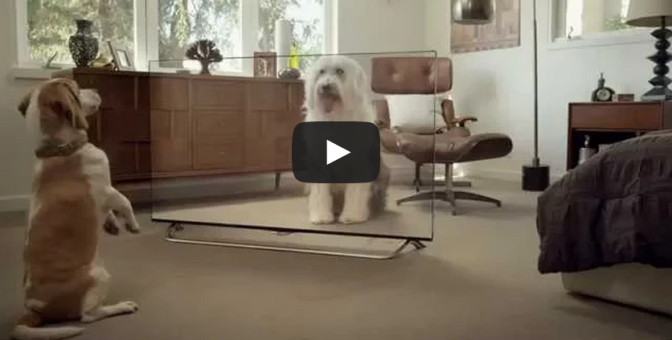 Funny cats and dogs video watching LG 4K TV
