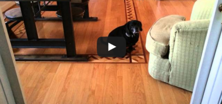 I have the dumbest dog alive – Dog stuck in mouse traps