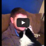 I'm telling on you – Dog feels guilty about chewing up bed