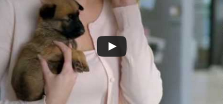 Kito is the father of five cute puppies! Electrabel Commercial (Belgian Energy Company)