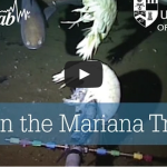 Life in the Mariana Trench – Deep Sea Video Camera