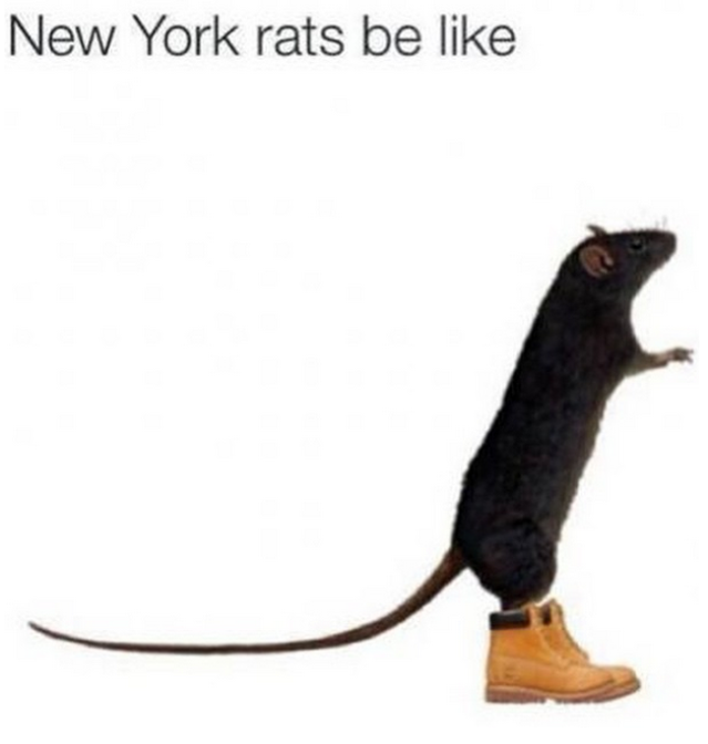 New York rats be like