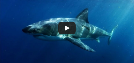 Something Ate This Shark…But What?