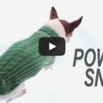 Throwing Chihuahuas in the Snow – Pancho and Chezzy