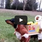 Two Monkeys Carrying a Box of Bananas Dog Costume