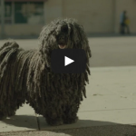Dr Pepper – Mop Dog (2015) Commercial