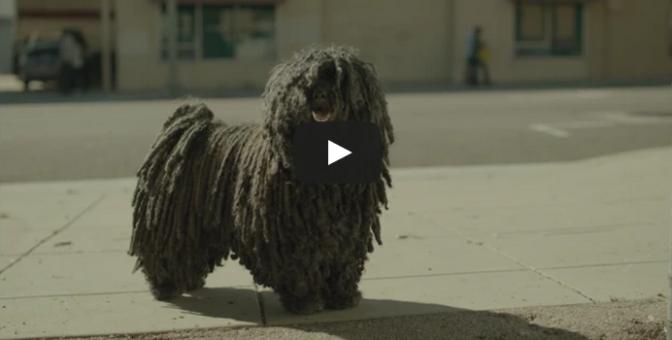 Dr Pepper – Mop Dog (2015)